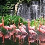 Vườn thú Quốc gia Singapore