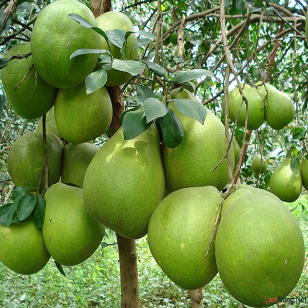 Miệt vườn trái cây Cái Bè địa điểm đẹp hút khách ở Tiền Giang